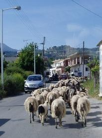Traffic in Crete village